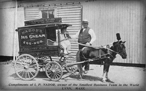 Early Ice Cream Cart and Pony.