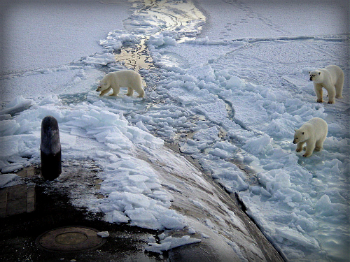 Polar Bears, North Pole, USS Honolulu. Image: Chief Yeoman Alphonso Braggs, US-Navy.